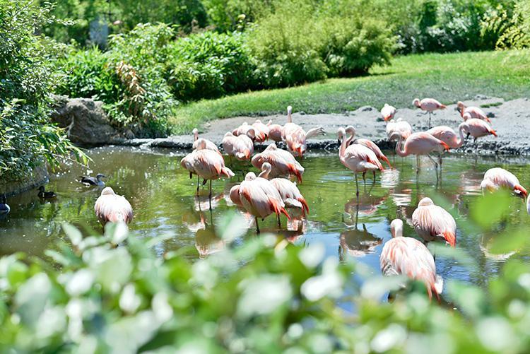 inspirierende Fotomotive im Zürcher Zoo